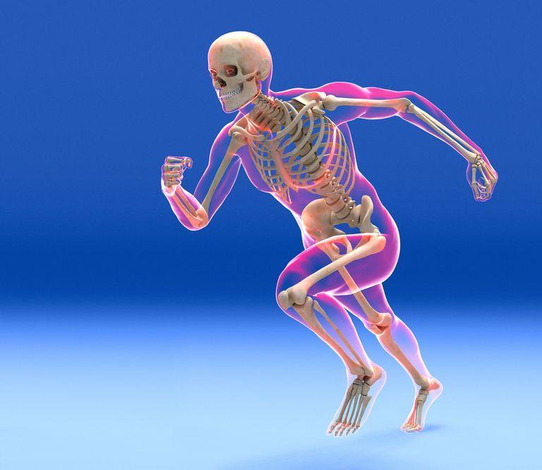 Човешки скелет в движение   Ayurveda Bansko