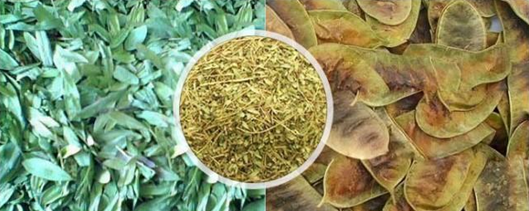 What is Cassia angustifolia (Senna) and what is its role in Ayurveda?